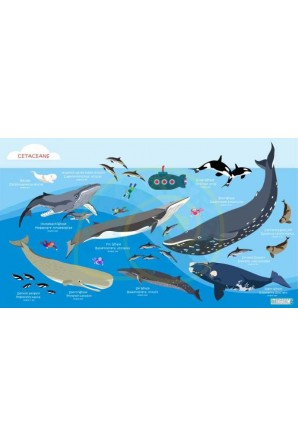 Cetaceans pattern towel Big...