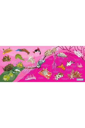 Nudibranch pattern towel...