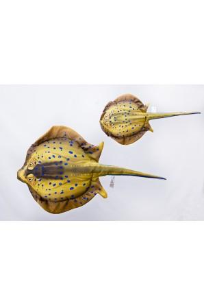 Cuscino di razza maculata blu